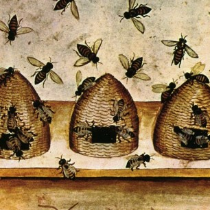 Renaissance Bees