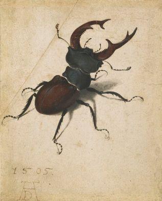 Dürer's Stag Beetle