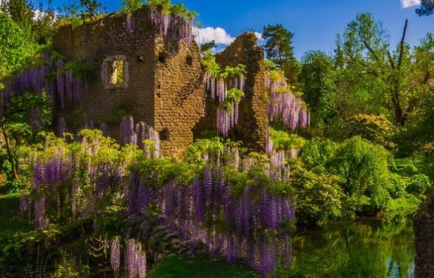 ninfa garden wisteria .jpg